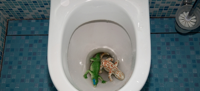 Woah, don't flush that!